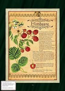Erdbeeren Pflegen Schneiden : die besten 25 himbeeren pflanzen ideen auf pinterest ~ Lizthompson.info Haus und Dekorationen