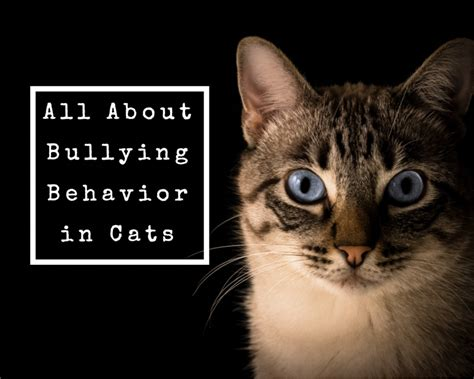 cat bully cats stop being ways each pethelpful