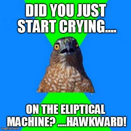 Hawkward Meme - hawkward meme memes