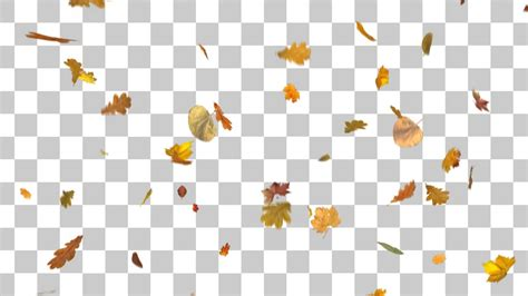 blowing falling leaves youtube