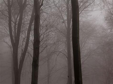 nebel im herbstwald hintergrundbilder kostenlos