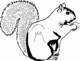 Squirrel Coloring Printable sketch template