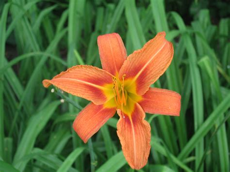types of flower bulbs images