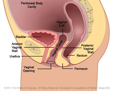 what can you spot things that go look and find board book human anatomy bladder uterus anatomy pregnancy
