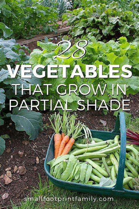 vegetables  grow  partial shade organic