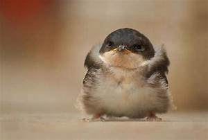 Cute Little Chubby Baby Bird | Cute Little Animals ...