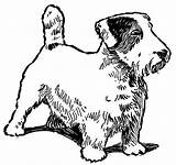 Coloring Pages Dog Jack Russell Terrier Pound Catcher Breed Template Sketch sketch template