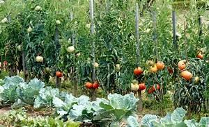 Planter Des Graines De Tomates : tomate semer et cultiver ooreka ~ Dailycaller-alerts.com Idées de Décoration