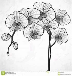 Black And White Orchid Drawing | www.pixshark.com - Images ...