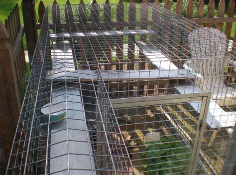 charmant cage pour chat exterieur 8 enclos pour chat ext 233 rieur et chatteries atlub