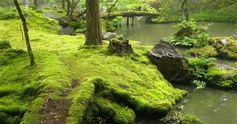 foto de Moss Bridges Ireland #travel scenery Pinterest