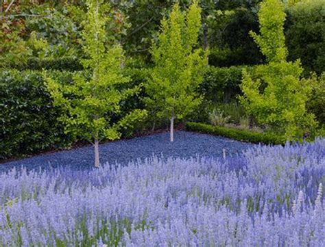 andrea cochran landscape xeriscaping plus drought proof gardening resources goop