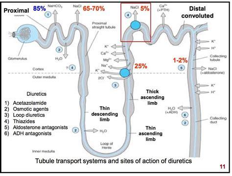 Cytotec In Dubai Hydrochlorothiazide For Diabetes Insipidus Synthroid