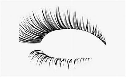 Outline Clipart Eyelash Eyelashes Eye Realistic Lashes