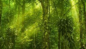 The Atomic Structure Abiotic Factors Of A Rain Forest Sciencing