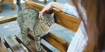 what to do with a stray cat what to do if you find a stray cat world s best cat