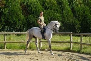 Combien De Chevaux : combien de fois par jour faut il sortir son cheval amour des chevaux ~ Medecine-chirurgie-esthetiques.com Avis de Voitures