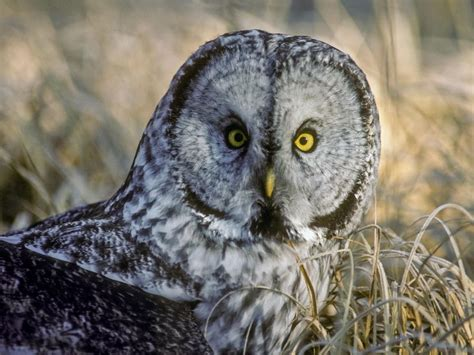 beyond owls and larks there are four types of sleepers