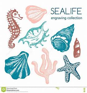 Sea Collection With Seashells, Starfish, Coral, Seahorse ...