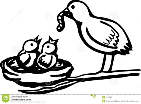 Baby Birds Feeded By Mother Vector Illustration Royalty ...