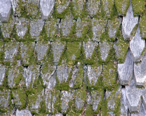 essig gegen moos moos vom dach entfernen essig moos entfernen essig