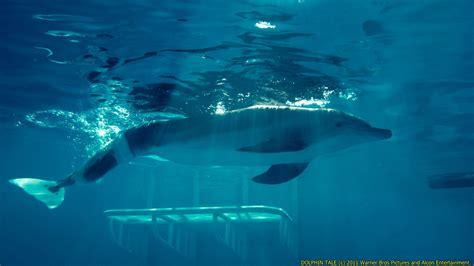 winter  dolphin wallpapers pics fun animals wiki