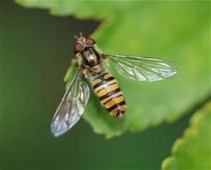 Welchen Geruch Mögen Wespen Nicht : wespen vertreiben mit kupfer ~ Articles-book.com Haus und Dekorationen