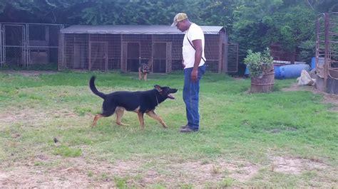 Back Yard Breeder Kennel Dogs-youtube
