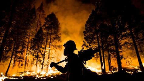 Using Forest Fires To Prevent Forest Fires Public Radio