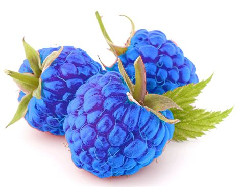 blue raspberry blue rasberry flavor concentrate frocup