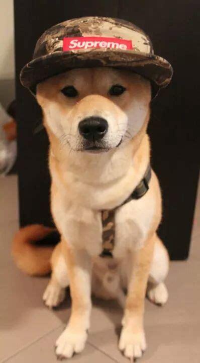 Japan Shiba Inu Petsandanimals Supreme Camo Puppy Hat