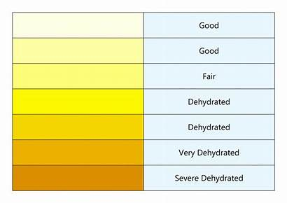 Dehydration Hydration Urine Chart Colour Signs Hydrated