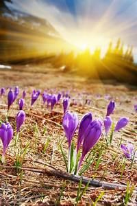 Zeit Für Frühling : der fr hling ist die zeit f r diese sch ne blume stockfoto colourbox ~ Orissabook.com Haus und Dekorationen