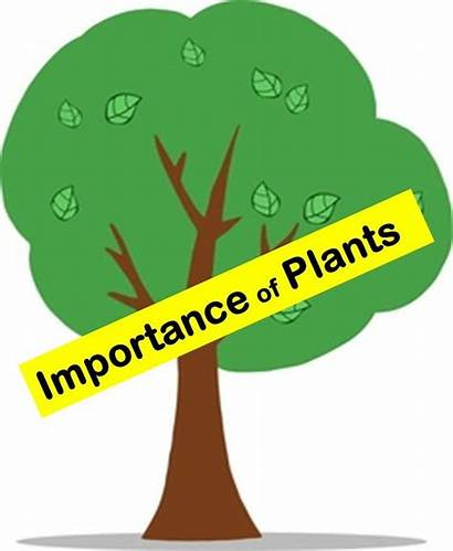 Importance Plants Plant Science Humans Animals Everyday