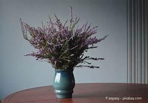 Pflegeleichte Pflanzen Für Die Wohnung : heidekraut die perfekte deko pflanze f r den herbst ~ Michelbontemps.com Haus und Dekorationen