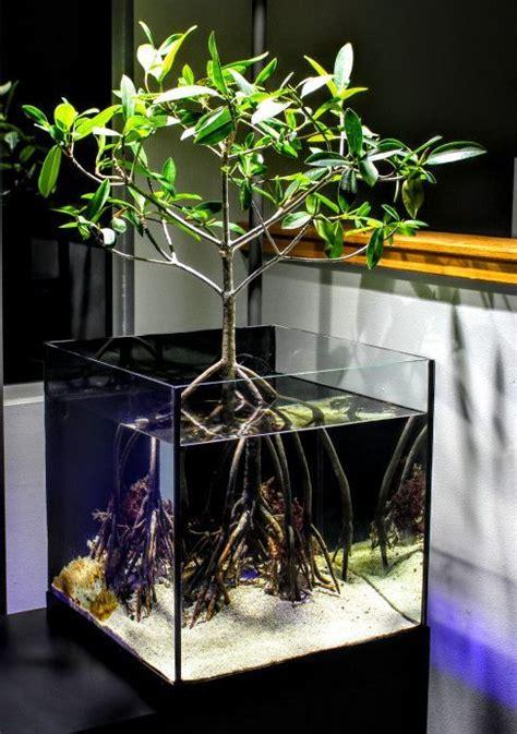 mangrove saltwater aquarium life  water aquarium reef aquarium tropical fish aquarium