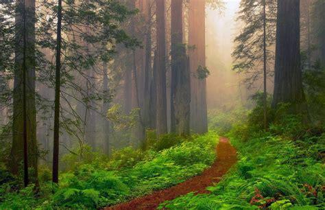 California Redwoods Wallpapers Top Free California