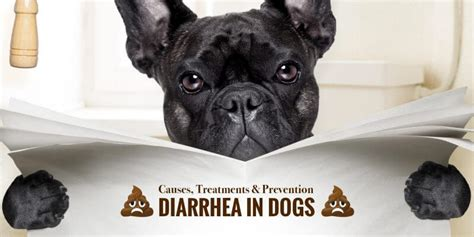 diarrhea in dogs diarrhea in dogs causes treatments prevention