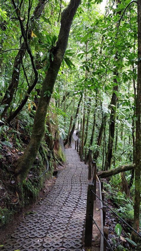 mistico arenal hanging bridges park costa rica visions  travel