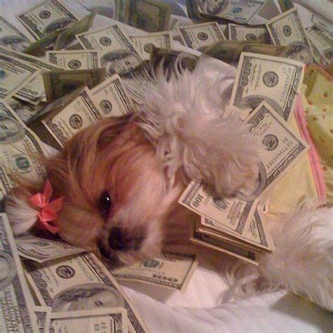 rich dogs  instagram    extravagant