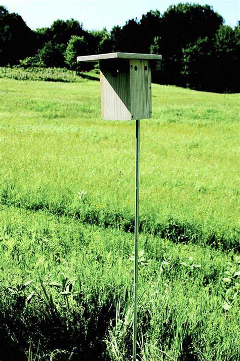 build  nesting box  bluebirds empress  dirt