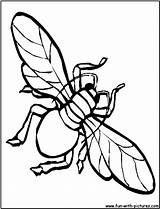 Coloring Housefly Fly Printable Fun Printablecolouringpages Larger Credit Sketch sketch template