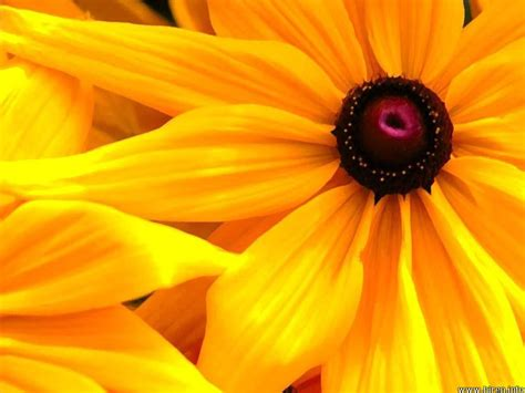 with yellow flowers flowers wallpapers yellow flowers wallpapers