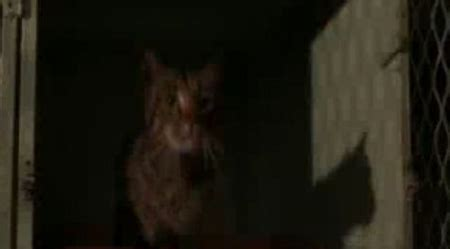 cats meow  cats  star pet sematary ii