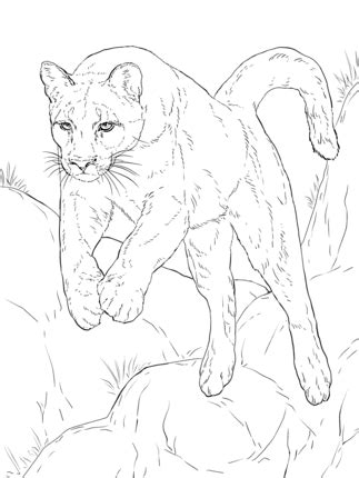 Click to see printable version of Leaping Cougar coloring