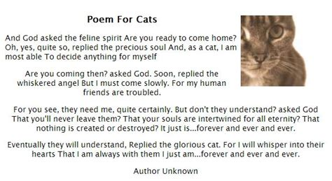 cat sympathy poems quotes quotesgram