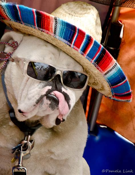 Fiesta Dog Must Be His First Day With His New Tongue