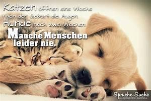 Traurige Bilder Zum Nachdenken : spr che zum nachdenken katzen hunde menschen spr che suche ~ Frokenaadalensverden.com Haus und Dekorationen