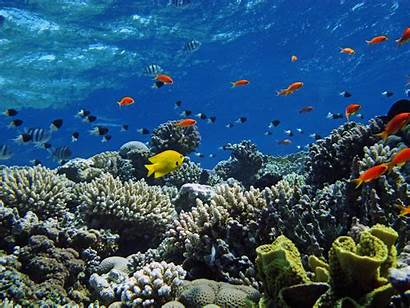 Under Sea Water Underwater Fish Swimming Colorful