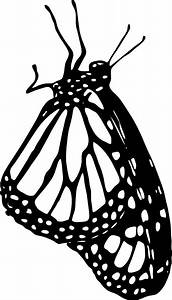Monarch Butterfly At Rest Outline Clip Art at Clker.com ...